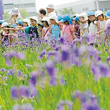 花かつみ園