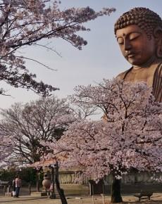 「東海市の四季」写真コンクールの作品募集