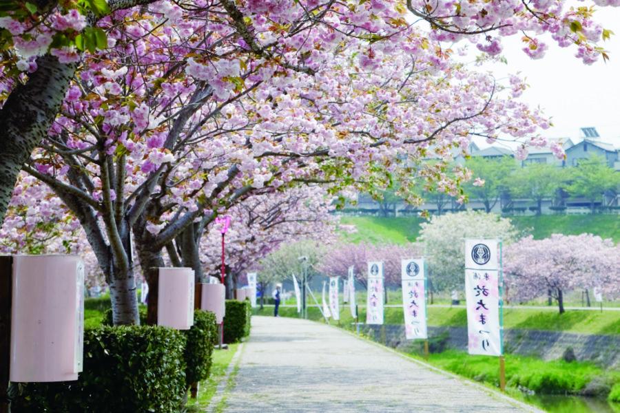 於大公園の桜