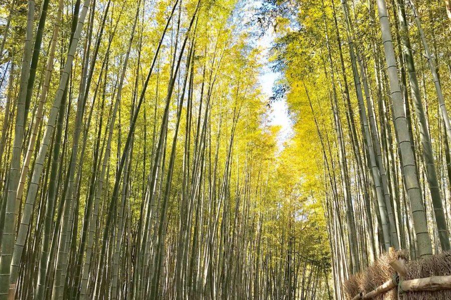 ちたの竹林